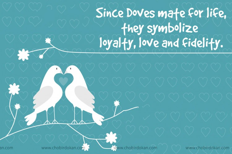 Doves and Love Birds meaning