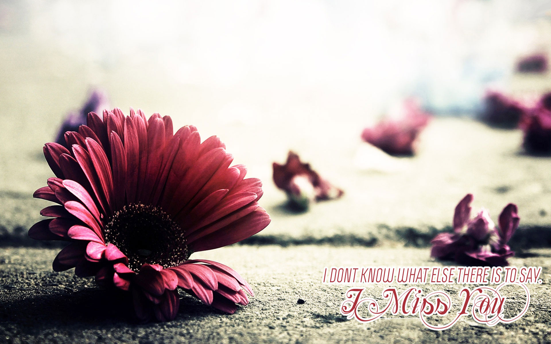 Wallpaper download i miss you - Miss You Images With Quotes