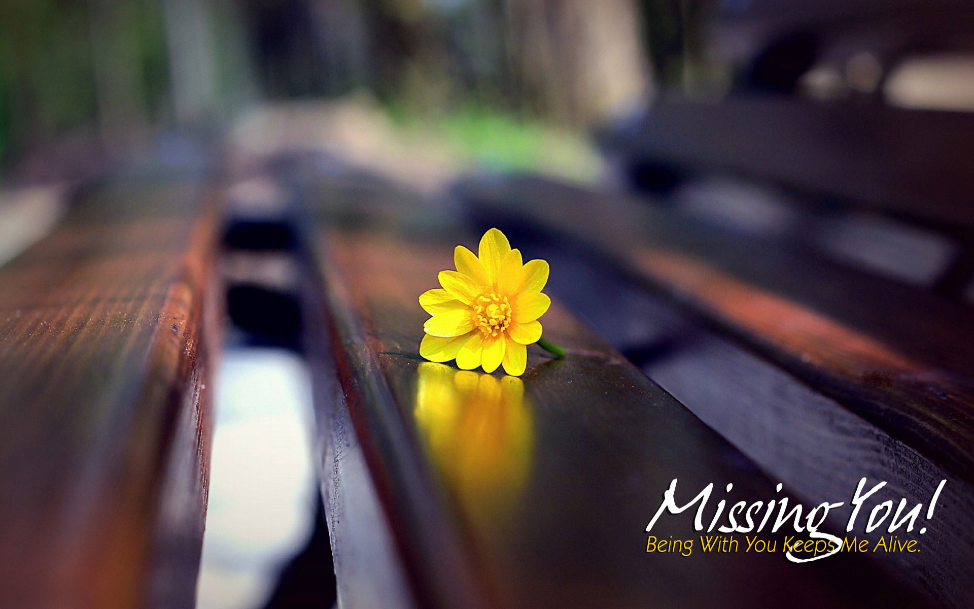 HD I Miss You Wallpaper for him or her|Romantic Wallpapers